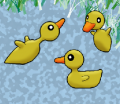 Duckys.png